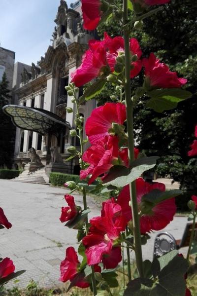 Muzeul se va redeschide pentru public începând cu data de 20 mai 2020